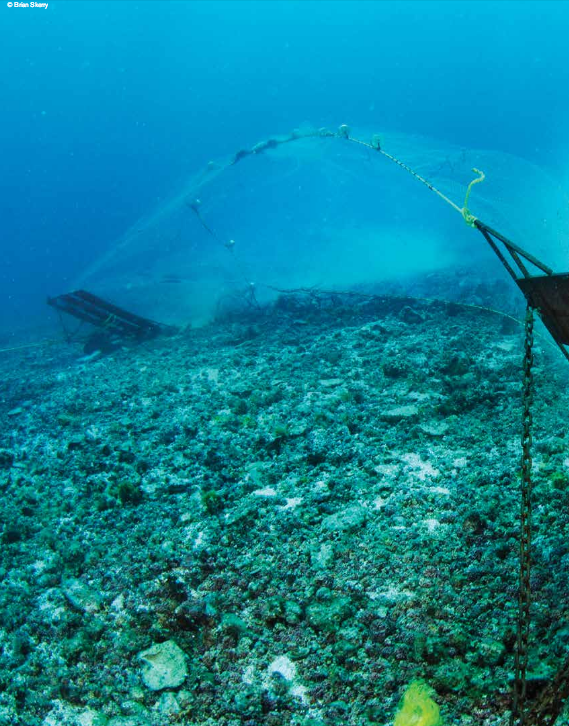 These types of trawl nets must come to an en in San Carlos if our reefs are ever to recover!